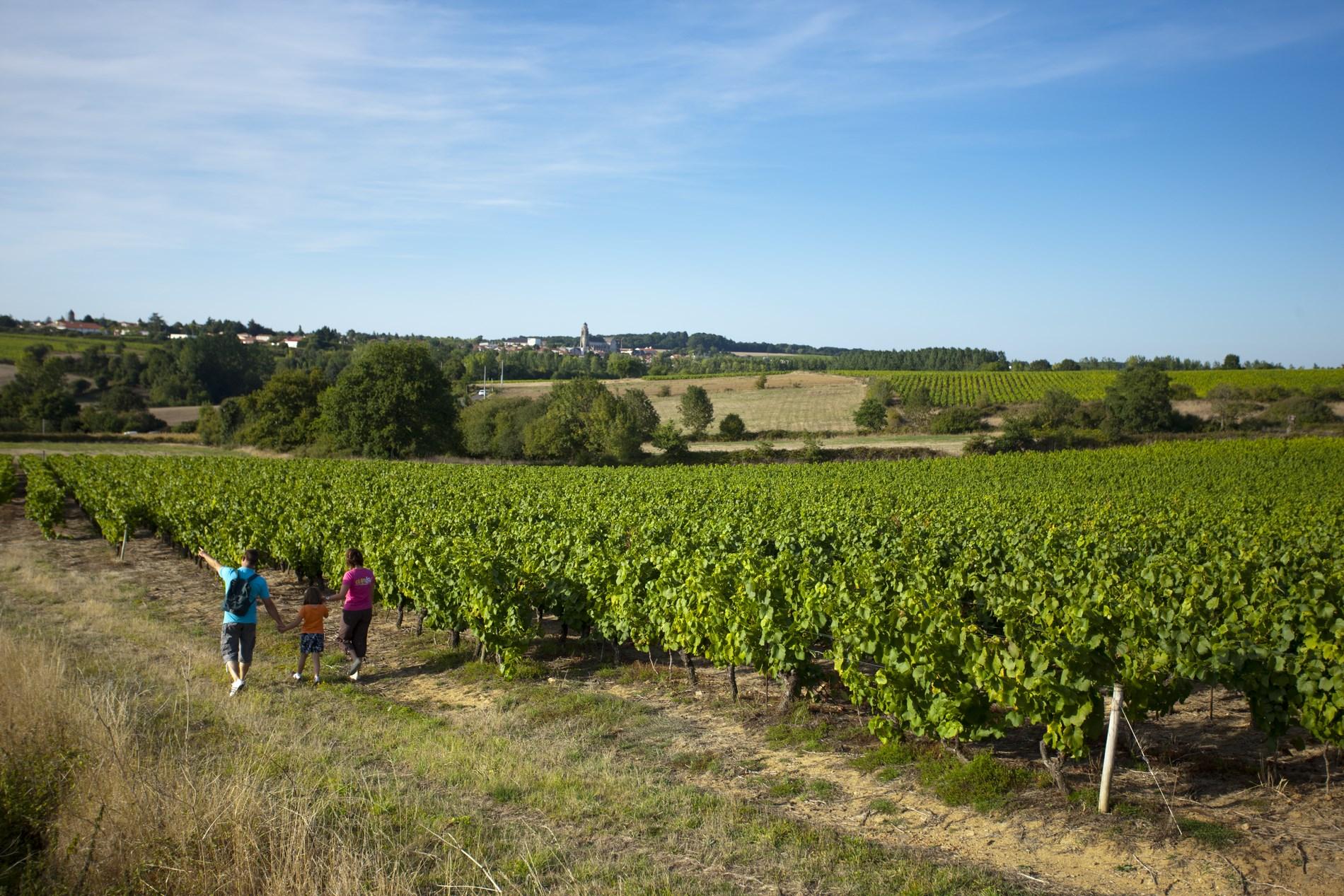 Les Jardins De La Robinière hiking routes - visit nantes vineyard