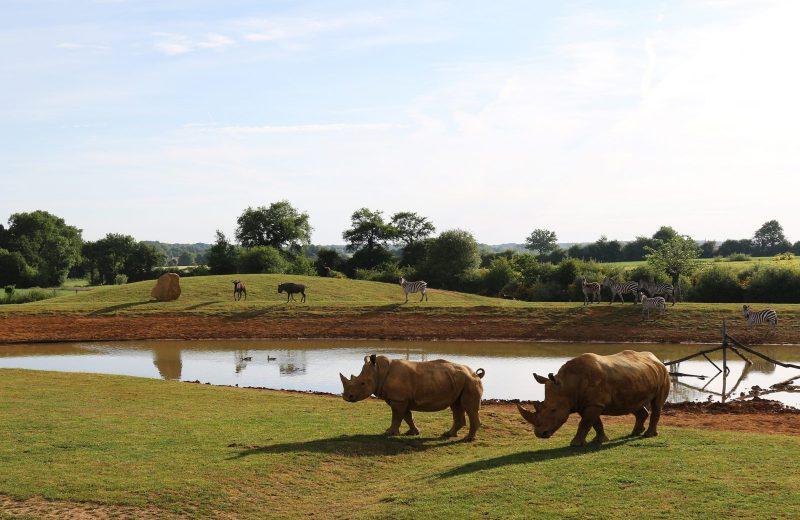 -Zoo-BDD-Plaine-des-rhinoceros-blancs
