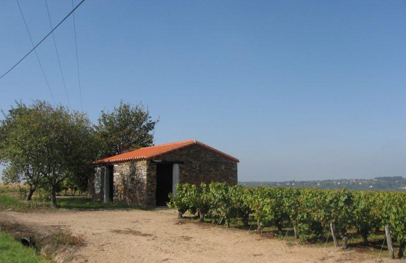 circuit-hte-chapelle-LCBM-levignoblenantes-tour (9)