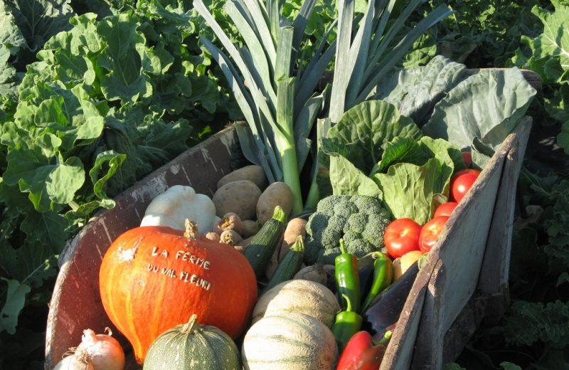 2015-degustations-terroir-ferme-val-fleuri-aigrefeuille-f-44-DEG-ruits et légumes locaux