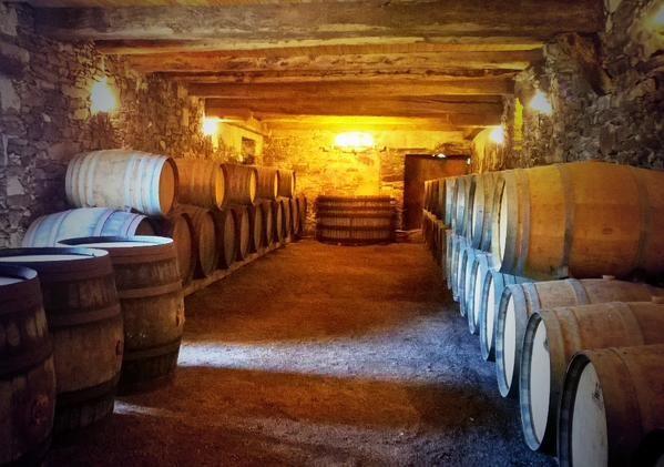 2016-cave-Chateau-du-Coing-Saint-Fiacre-44-levignobledenantes-tourisme-DEG (13)