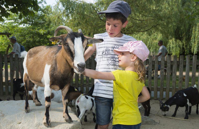 Espace mini-ferme – Zoo BDD