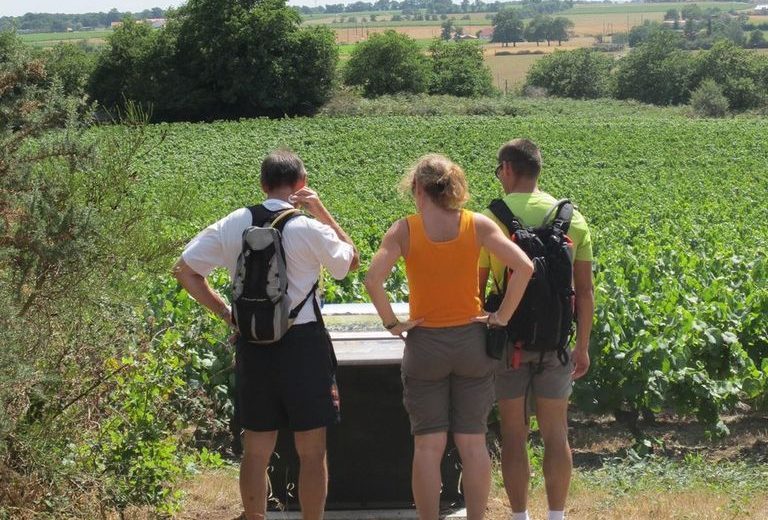 GRP Sèvre&Maine belvédaire vignes grenaudiaire