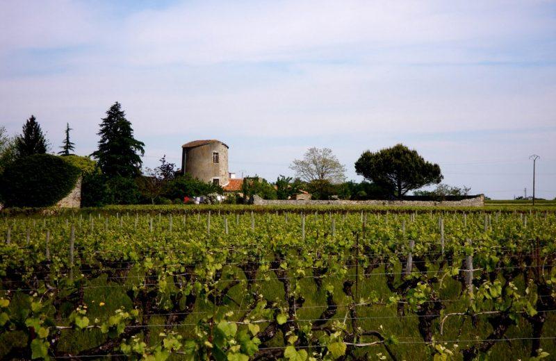 circuit-boucle-pedestre-bois-joli-chateau-thebaud-44-ITI (2)