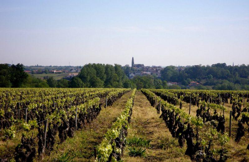 circuit-boucle-pedestre-bois-joli-chateau-thebaud-44-ITI (4)