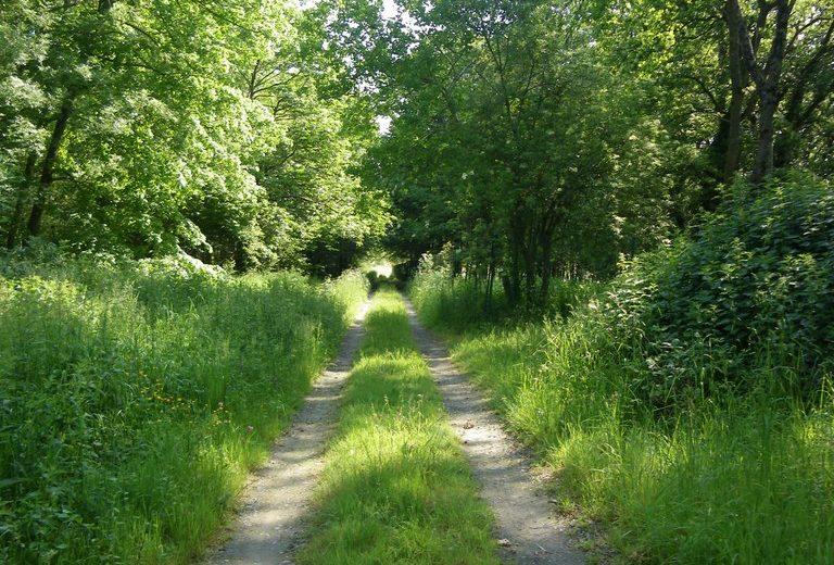 circuit-boucle-pedestre-vigners-en-villages-la-haye-fouassiere-44-ITI  (2)