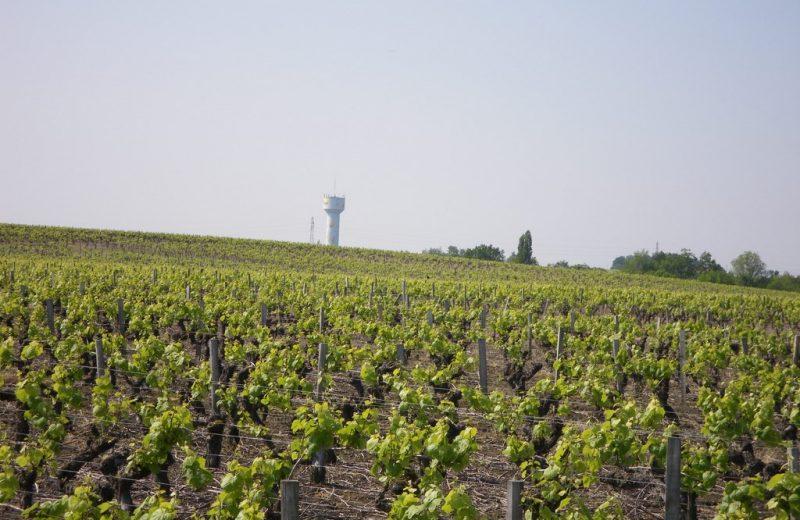 circuit-boucle-pedestre-vigners-en-villages-la-haye-fouassiere-44-ITI  (3)