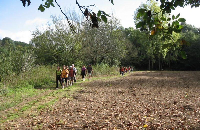 circuit-boucle-pedestre-vignes-et-rivieres-maisdon-sur-sevre-44-ITI  (4)