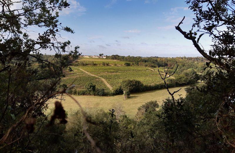 circuit entre moulins et chateaux la haye fouassiere  (5)