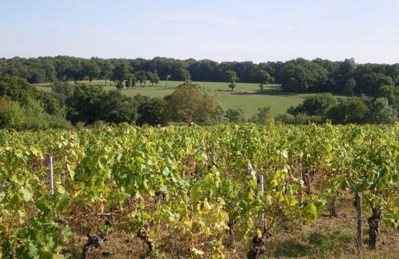 circuit-les-piliers-le-landreau-levignoblenantes-tourisme (6)