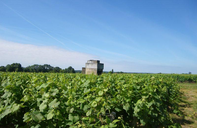 circuit-vignes-mouzillon-levignoblenantes-tourisme (8)
