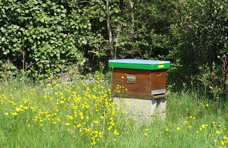 rando-croquis-chapelle-basse-mer-ruches-levignobledenantes-tourisme (2)
